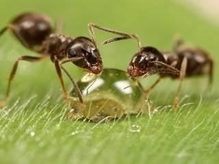 Как навсегда избавиться от муравьев на дачном участке: обзор проверенных методов