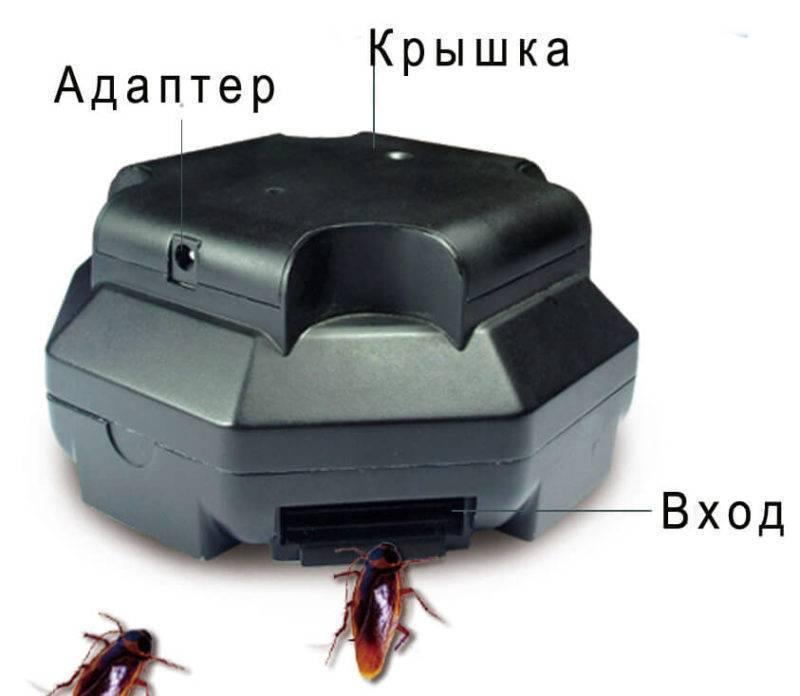 Как изготовить простые и эффективные ловушки для тараканов своими руками