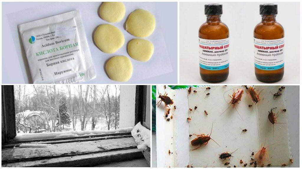 Особенности использования препарата гет от клопов и других насекомых