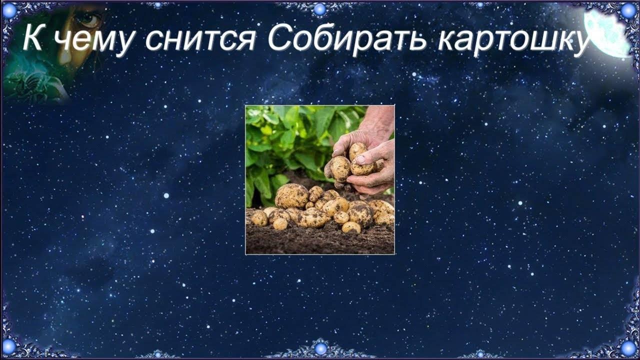 Колорадские жуки к чему снятся