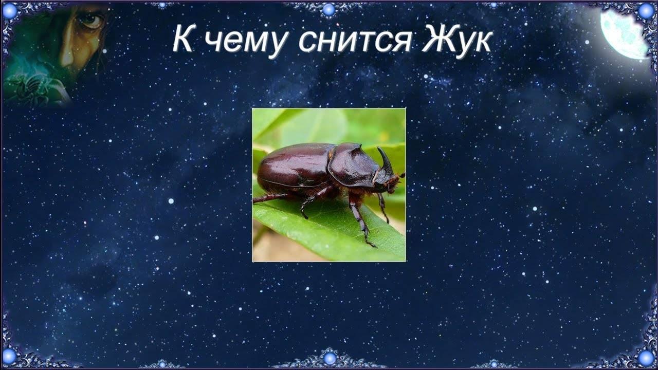 Сонник красные личинки колорадского жука