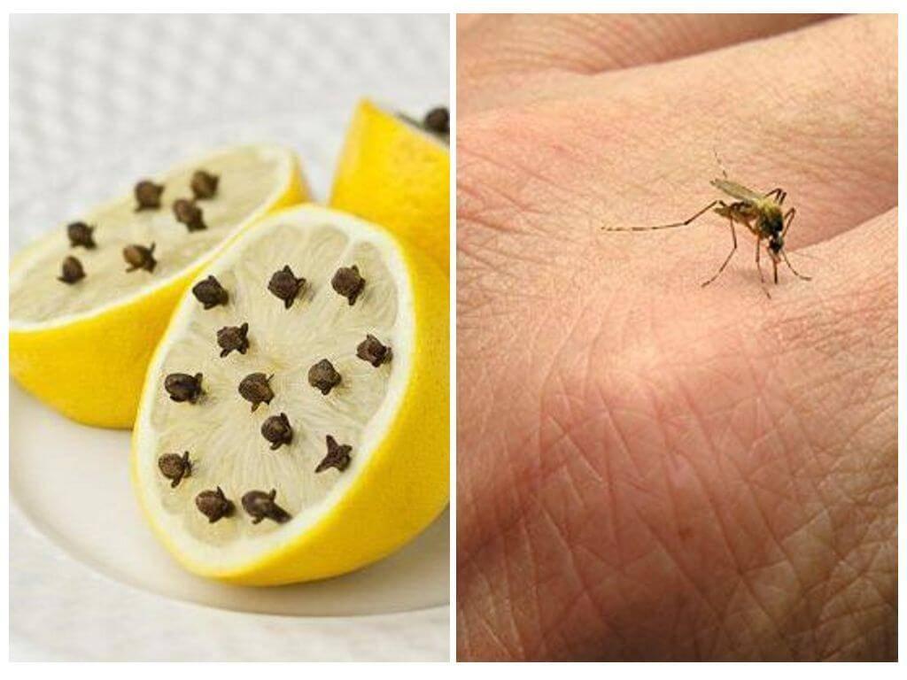 Эффективное средство после укусов комаров: обзор, лучшие рецепты и отзывы