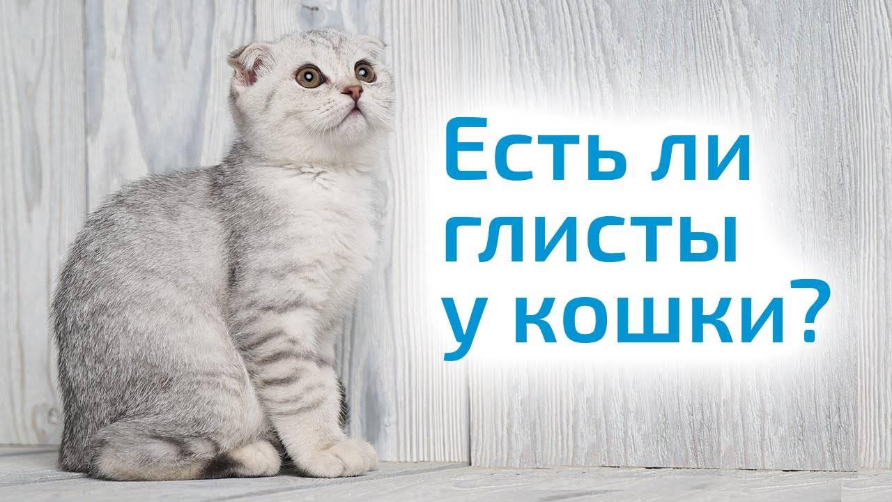 Как узнать есть ли у кошки блохи