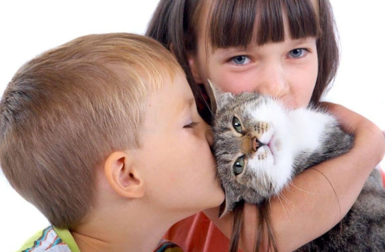 Заразиться глистами от кошки – возможно ли это?