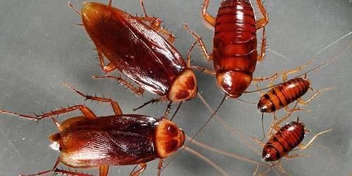 К чему можно увидеть тараканов во сне?
