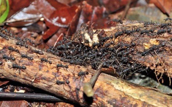 Как выгнать муравьев с помощью корицы?