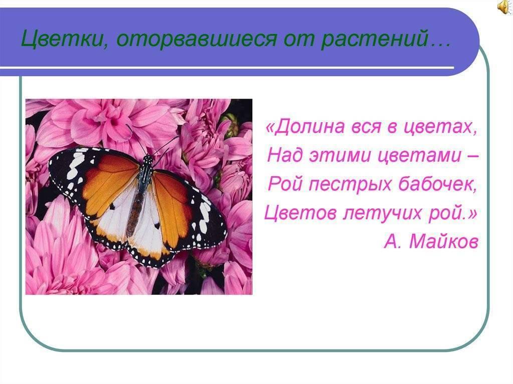 Бабочка павлиний глаз — описание, среда обитания, виды