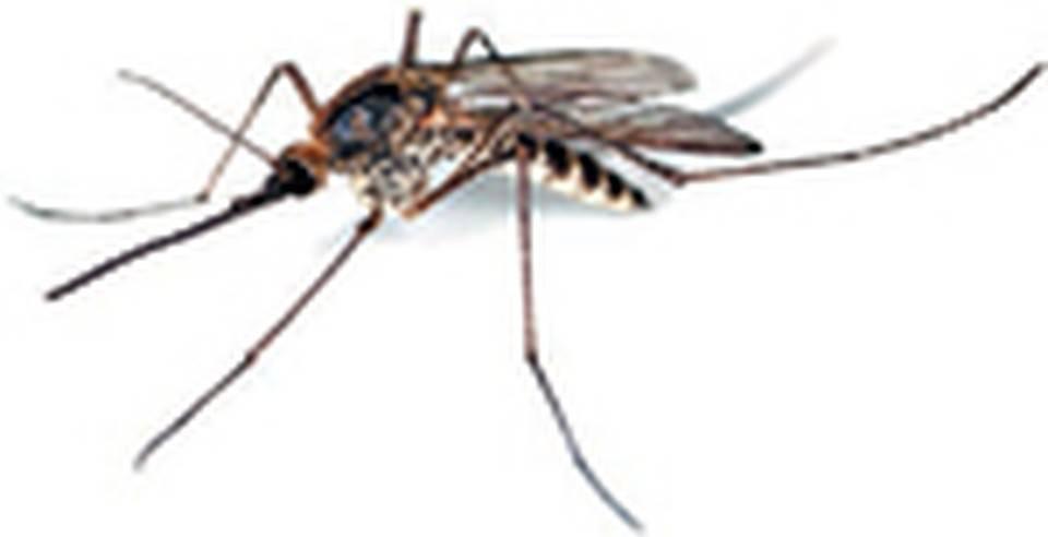 Есть ли комары в сочи и адлере