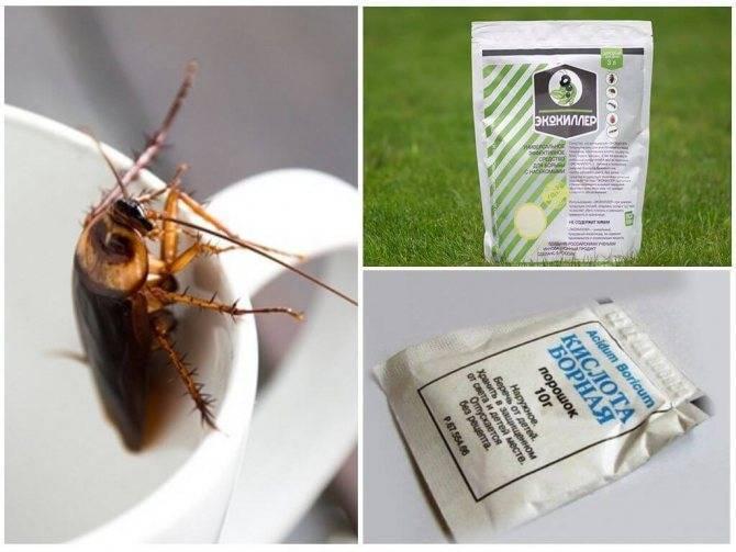 Самая эффективная отрава от тараканов