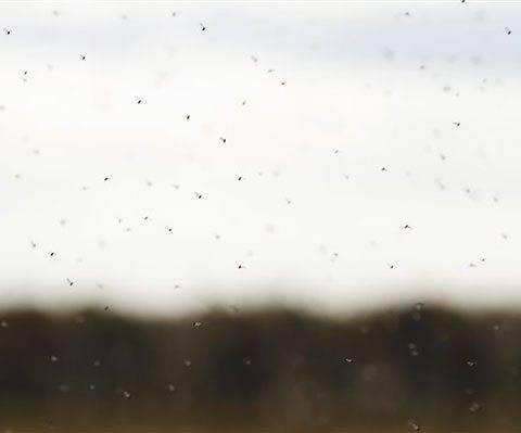 Как сделать ловушку для мух своими руками: лучшие конструкции