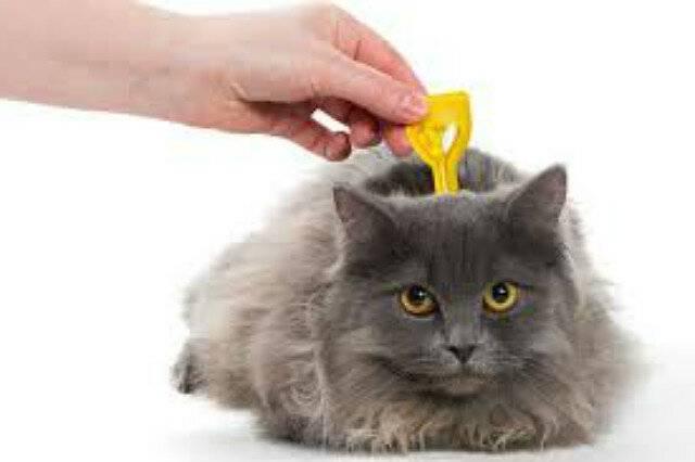 Почему кошка чешется от капель от блох и другие причины зуда