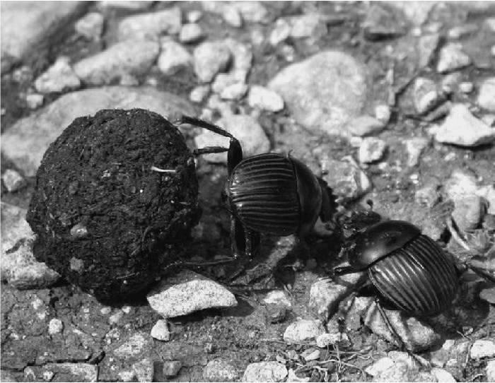 Какие жуки больше всего вредят саду – фото и описания вредителей
