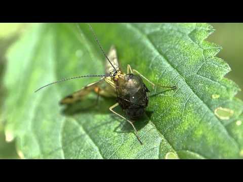 Топ-20 самых необычных насекомых в мире