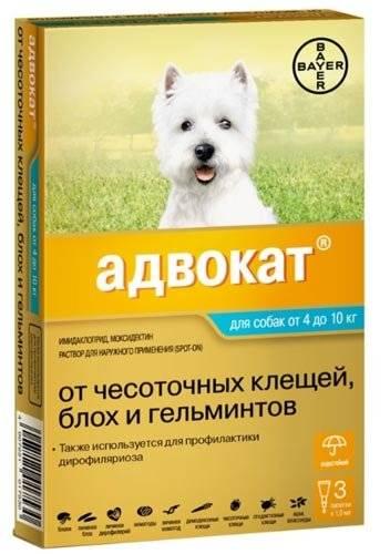 Как выбрать защиту от клещей для собаки? сравнение препаратов.