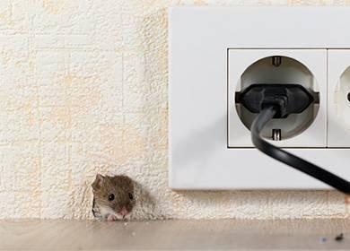 Как отмыть клей от мышей?