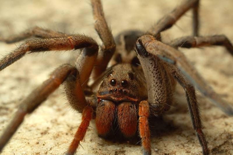 Виды пауков и помощь при укусах