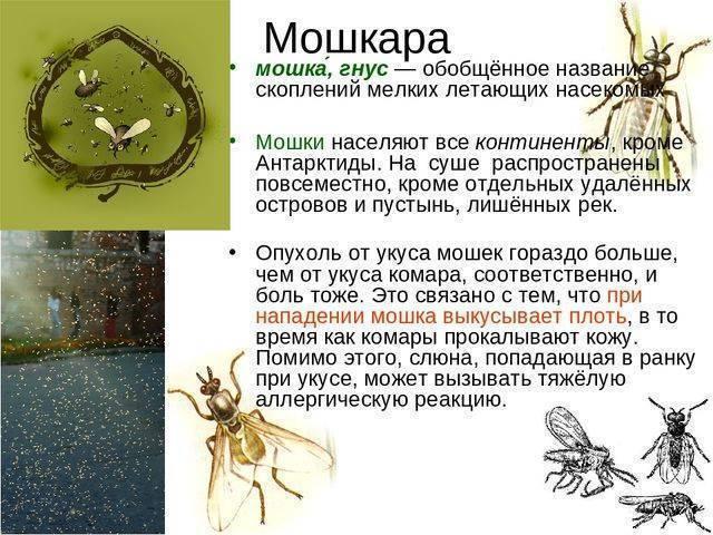 7 укусов насекомых, которые нельзя игнорировать