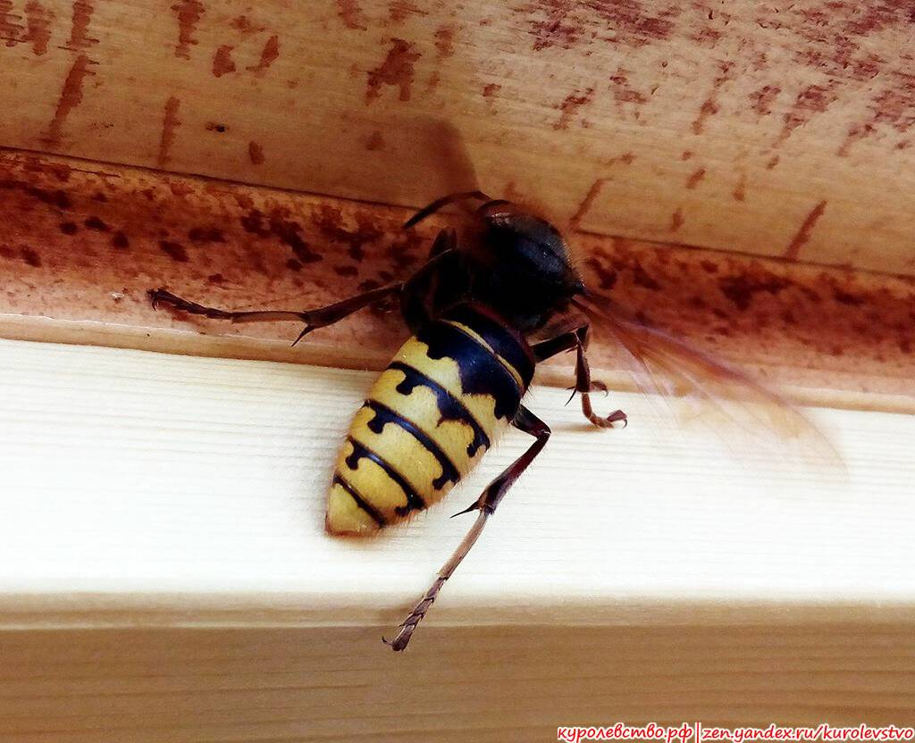 10 самых невероятных фактов о насекомых