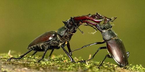 Во сне приснились майские жуки