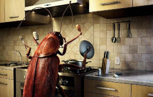 Эффективные народные средства от тараканов