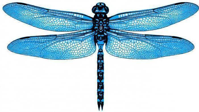 Личинка стрекозы – универсальная приманка на окуня