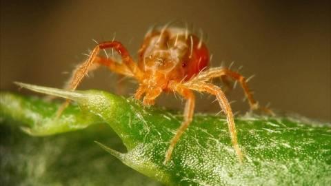3 метода борьбы против паутинного клеща на комнатных растениях
