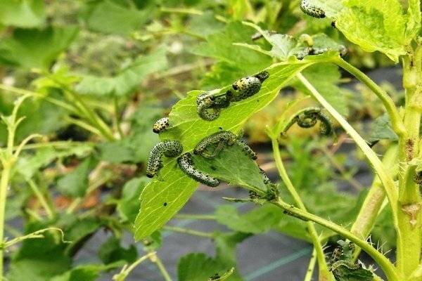 Как избавиться от гусениц на плодовых деревьях: самые эффективные методы борьбы