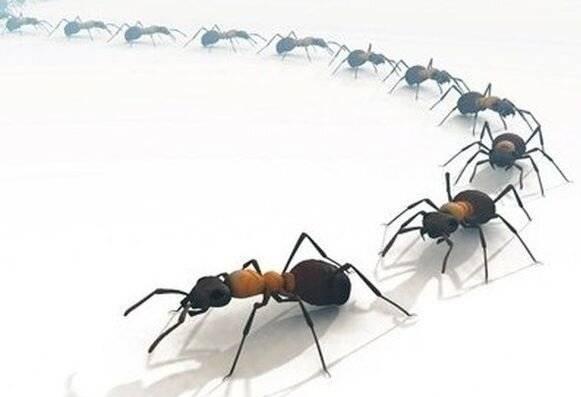 Как избавиться от муравьев в квартире народными средствами