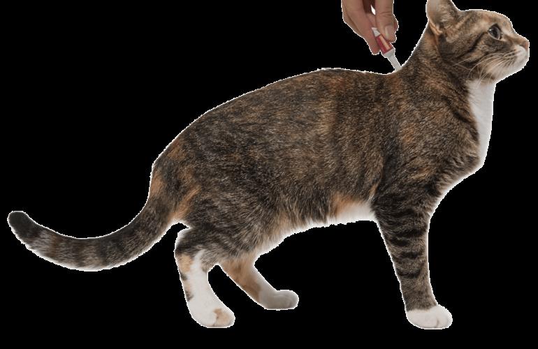 Капли инспектор на холку для кошек от блох, клещей и глистов: отзывы, как применять, цена. лучшие ли они?