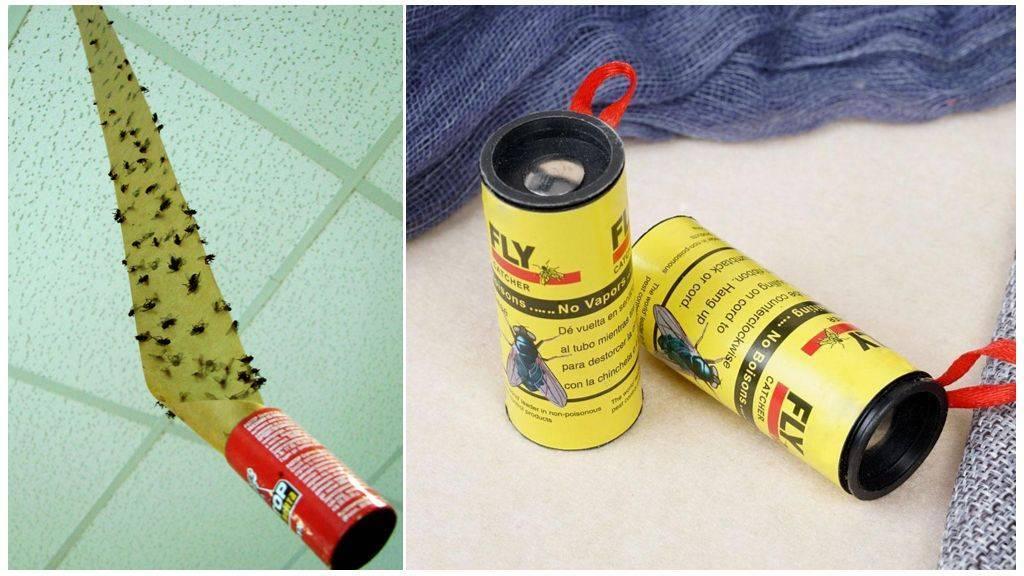 Как легко и практически бесплатно сделать липкие ленты для мух