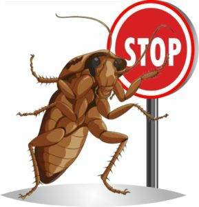 Дезинфекция от тараканов: способы и основные правила обработки жилых помещений от насекомых