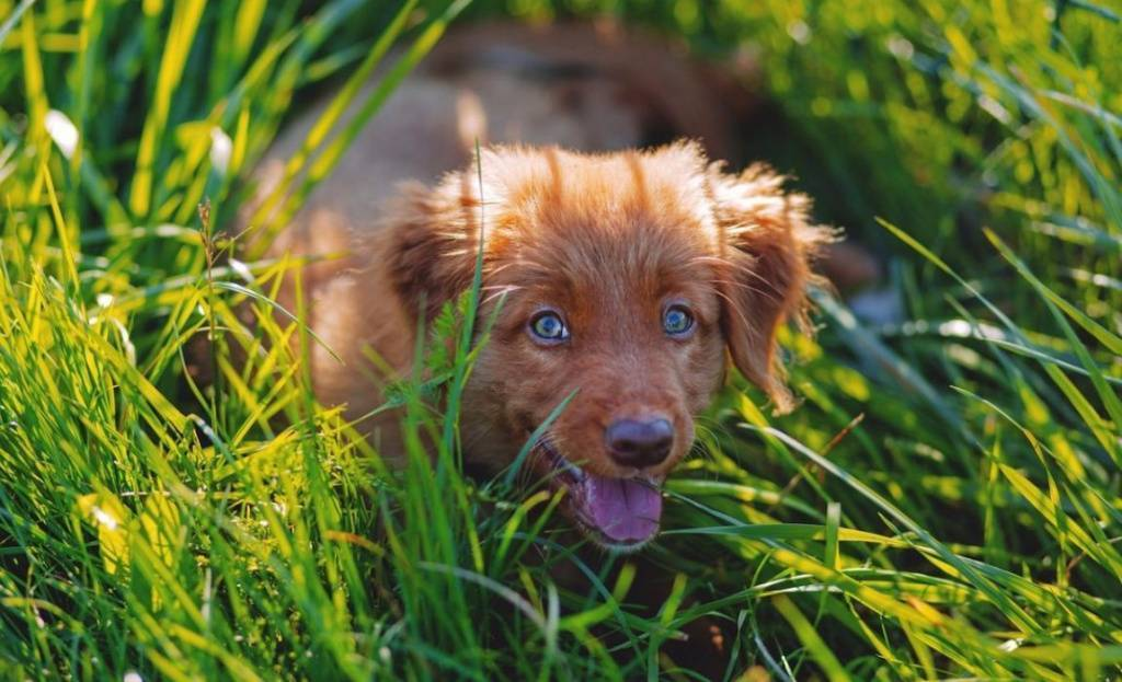 Клещ укусил собаку – что делать в домашних условиях: симптомы укуса и лечение животного, возможные последствия
