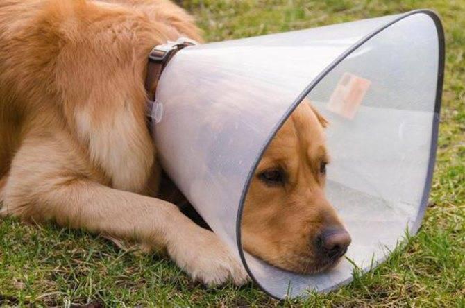 Бывают ли вши у собак