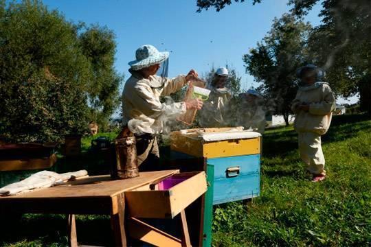 Причины, признаки и способы борьбы с воровством пчел