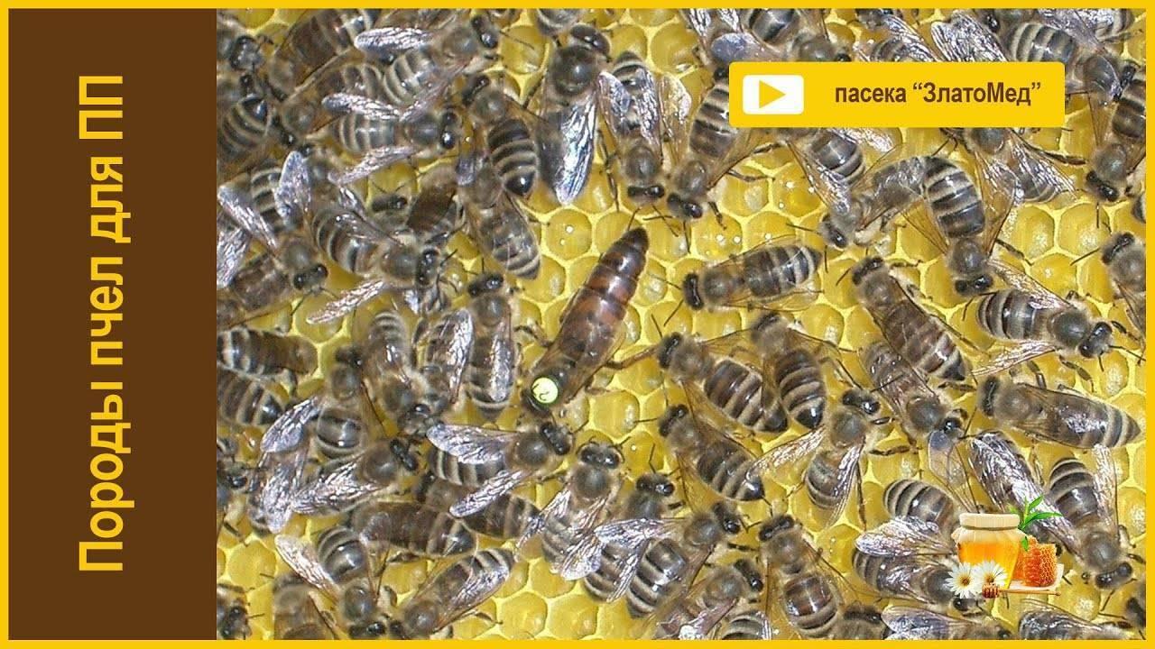 Пчелиные улья — чертежи, размеры, проекты и стандарты. пошаговое описание как построить своими руками (видео + 130 фото)