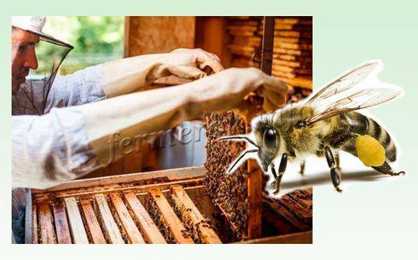 Где и как зимуют пчелы? Особенности зимовки