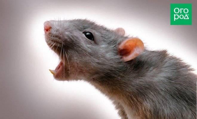 Чем опасна летучая мышь