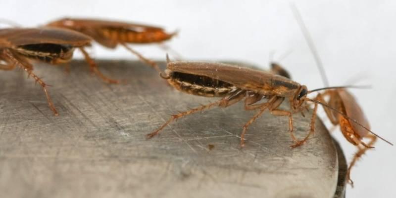 Средство от тараканов глобал (global)