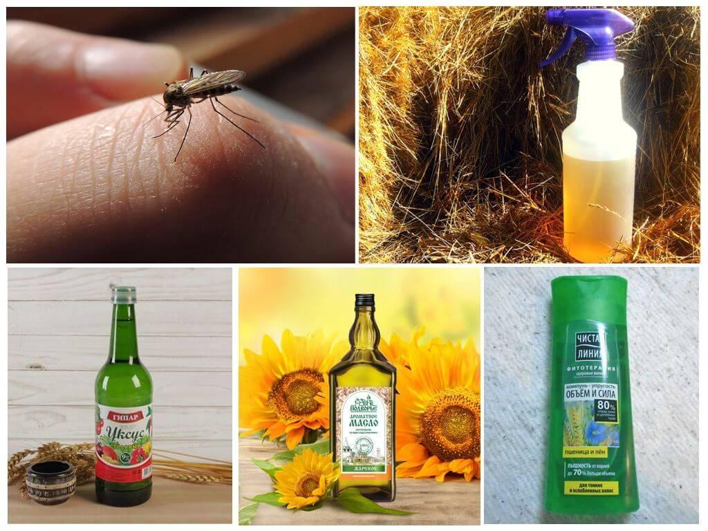 Защита от укусов комаров: проверенные рецепты лучших народных средств