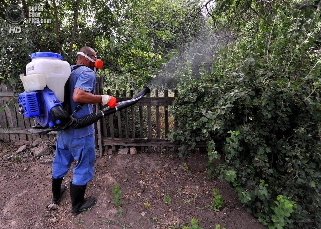 Как бороться с саранчой на огороде