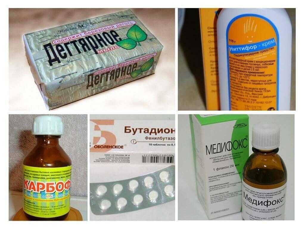 Приказ о профилактике педикулёза