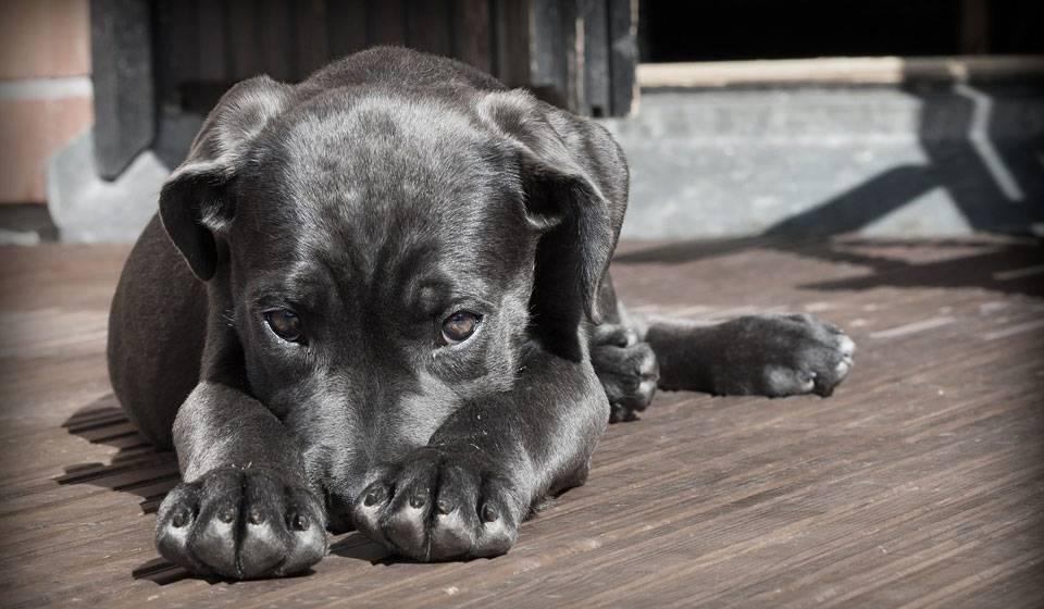 Осталась болячка после укуса клеща у собаки. симптомы после укуса клеща у собак: как понять, что беспокоит питомца. поддержка сердечной и дыхательной систем