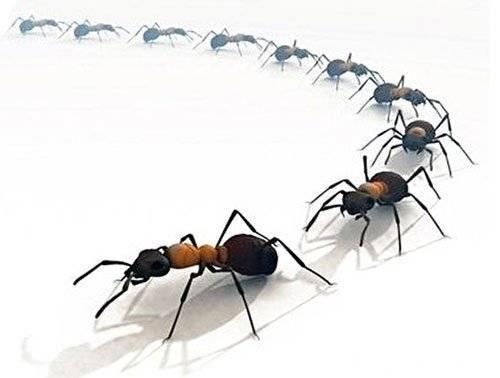 Как избавиться от муравьев в доме навсегда