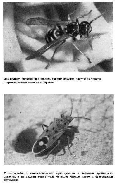 Большое полосатое насекомое