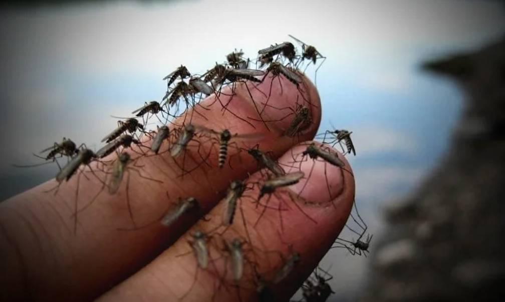 Уличные ловушки для комаров