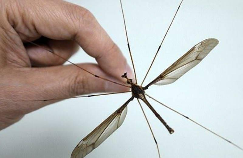 Избавляемся от комаров дома