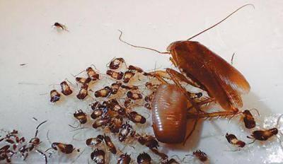 Как избавиться от тараканов на кухне – лучшие методы борьбы