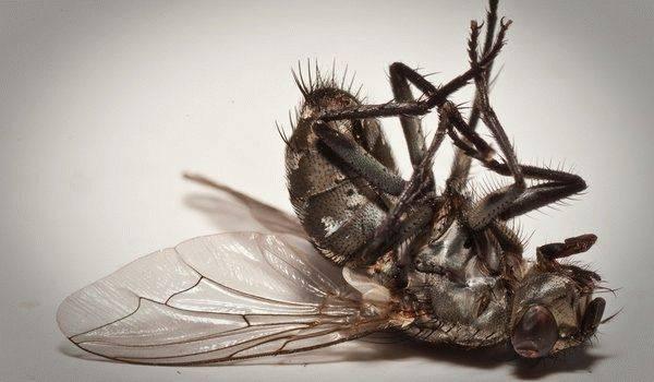 «сонник муха приснилась, к чему снится во сне муха»