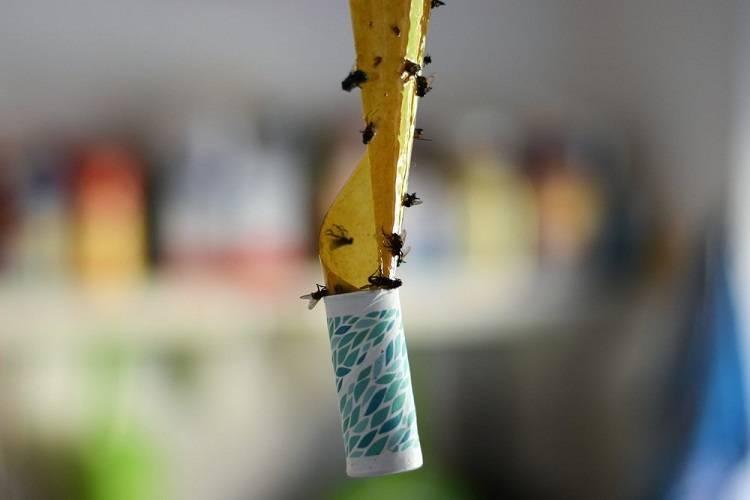 Как сделать ловушку для мух своими руками