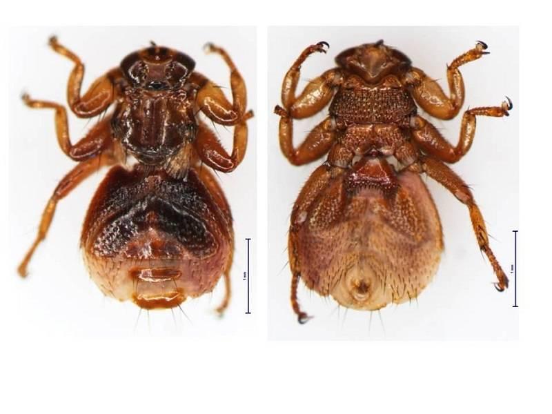 Что собой представляют личинки клещей и насколько они опасны для человека